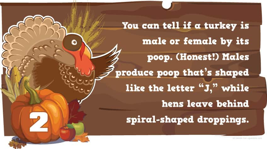 You might know about turkeys, but what about \u201cwild\u201d turkeys