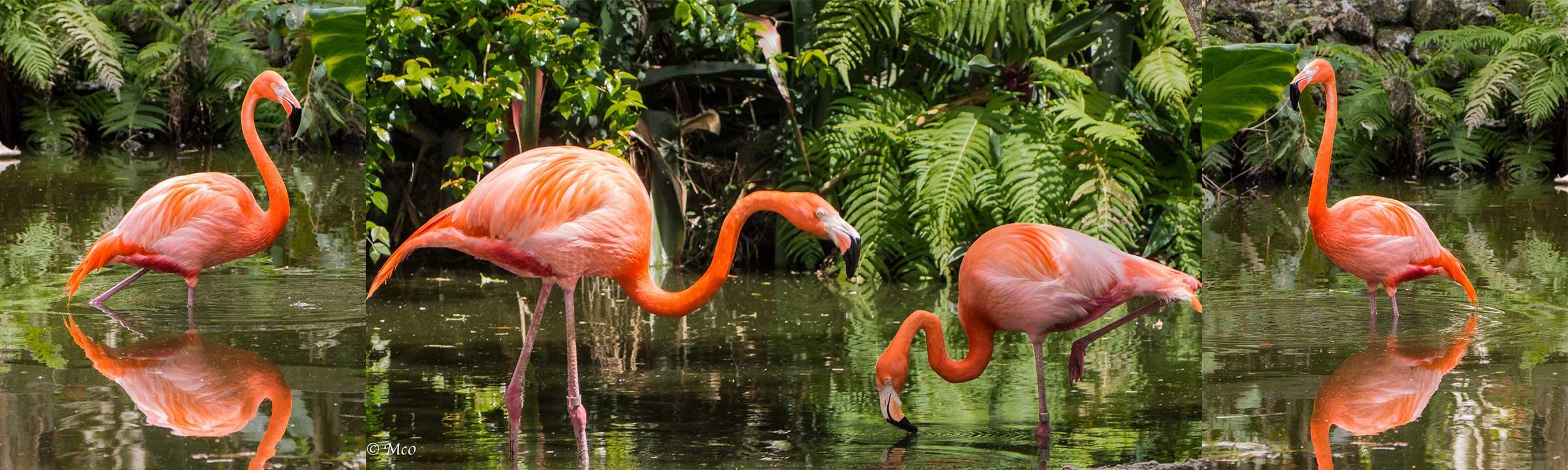 banner-flamingo