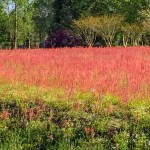 Pink fields