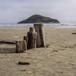 Island & driftwood mushroom