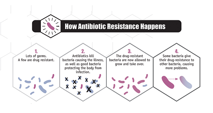 antibiotic resistance bacteria diagram