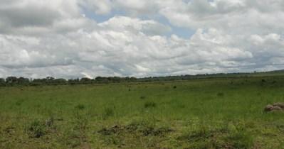 Gray termite hills