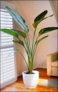 Indoor Plants 01