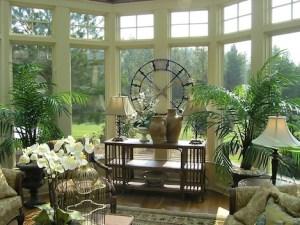 Indoor Plants 04