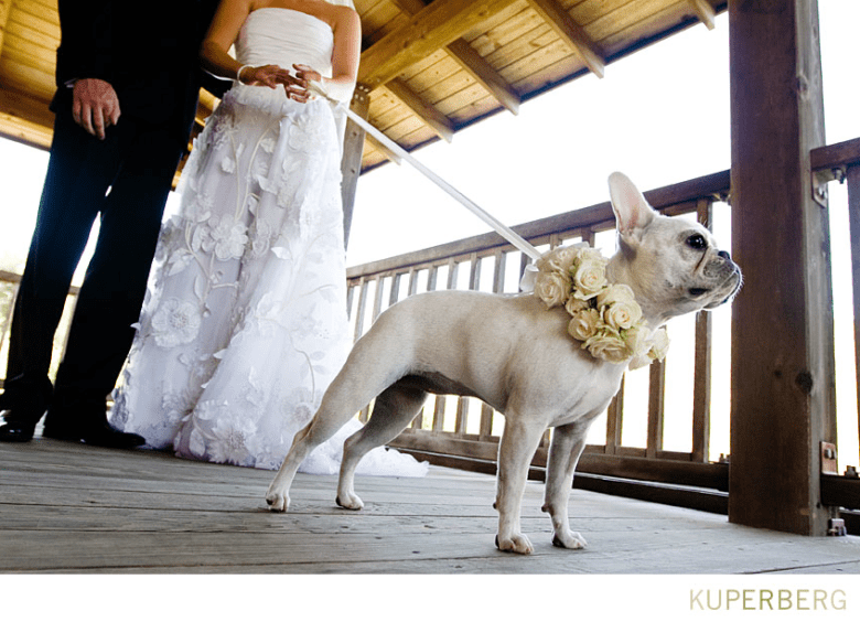 Including-Beloved-Pets-In-Your-Wedding