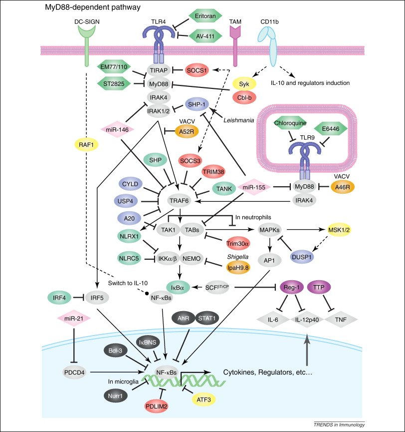 Dissecting negative regulation of Toll-like receptor signaling