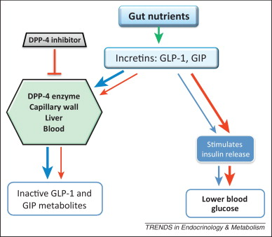 Is there a place for incretin therapies in obesity and prediabetes