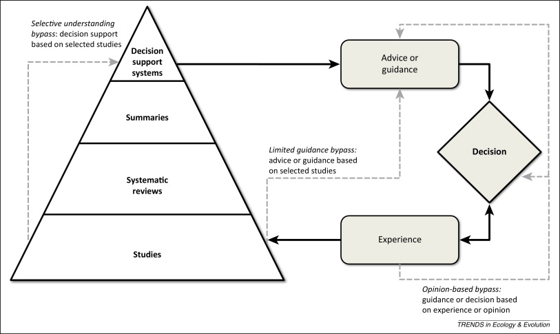 pyramid radio wiring diagram