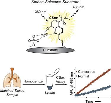 Interrogating Signaling Nodes Involved in Cellular Transformations