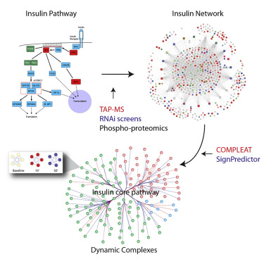 An Integrative Analysis of the InR/PI3K/Akt Network Identifies the