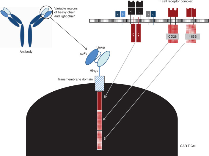 Chimeric antigen receptor T-cell therapy for solid tumors Molecular
