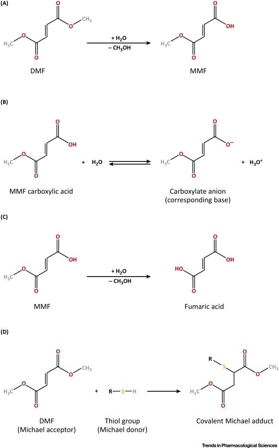 The Pharmacokinetics of Fumaric Acid Esters Reveal Their In Vivo