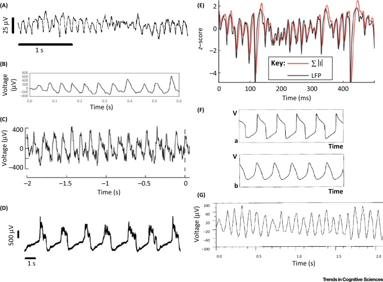 Brain Oscillations and the Importance of Waveform Shape Trends in