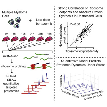 Time-Resolved Proteomics Extends Ribosome Profiling-Based