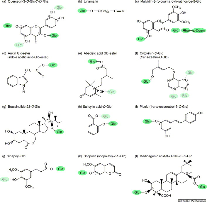 Plant secondary metabolism glycosyltransferases the emerging