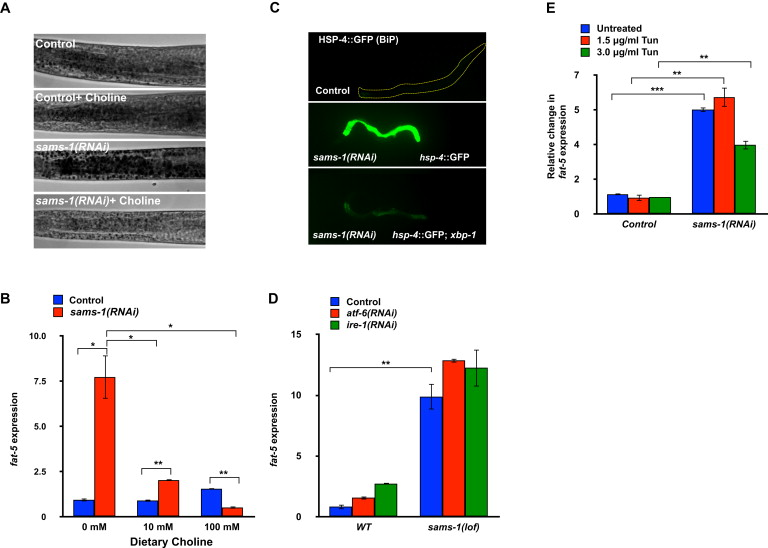 A Conserved SREBP-1/Phosphatidylcholine Feedback Circuit Regulates