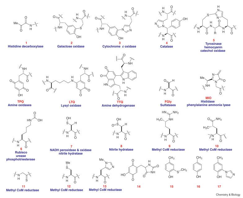 Novel cofactors via post-translational modifications of enzyme