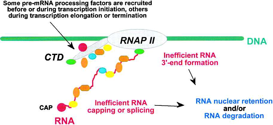 Quality Control of mRNA Function Cell