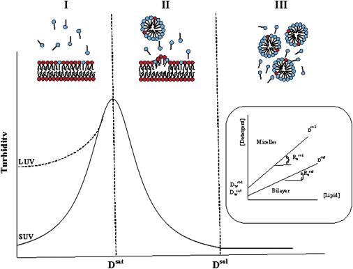 The Mechanism of Detergent Solubilization of Lipid Bilayers