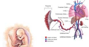células madre del cordon umbilical