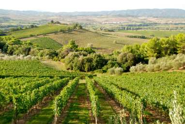 2a_main-story-tuscany-castello-banfi-vineyards