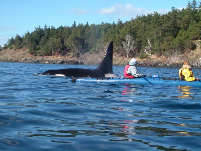 Who Makes The Calendar Islands Islands Of Casco Bay Visit Maine Centennial Canoe Centennial Canoe San Juan Islands Wa