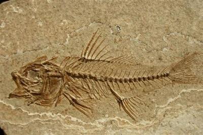 Quando la forma ignorò Darwin: introduzione alla scienza della morfologia. Parte 2