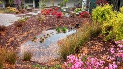 Small Of Rain Garden Plants