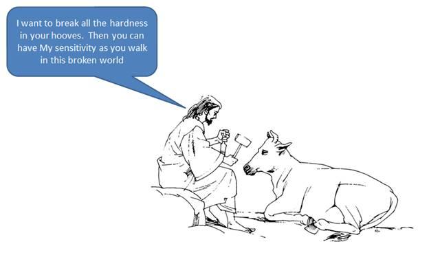 God Speaks Through Animals cfcindia, Bangalore