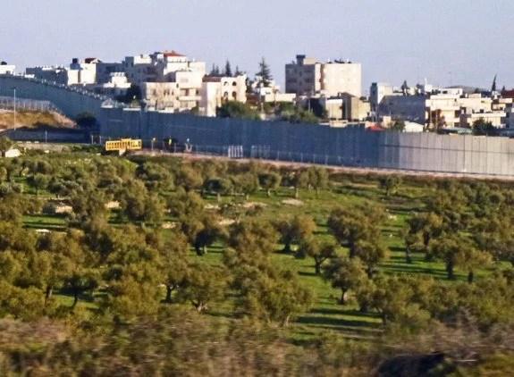 Israeli defense barrier olive trees