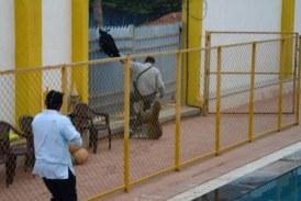 #Video Ataque De Leopardo Deja Tres Heridos En Una Escuela