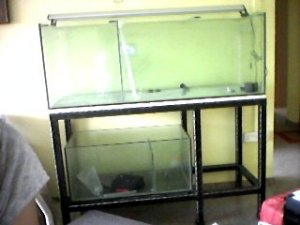 Fish tank stand 5ft 5ft rena fish tank and stand full for Double fish tank stand