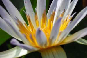 Flower Series Waterflowers