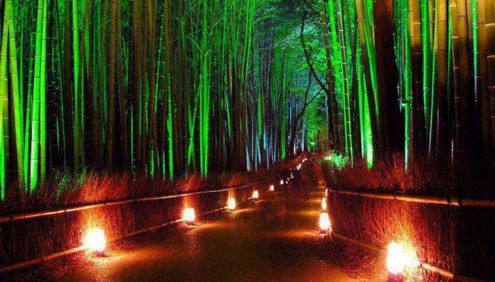 Sagano Bamboo Forest Japan