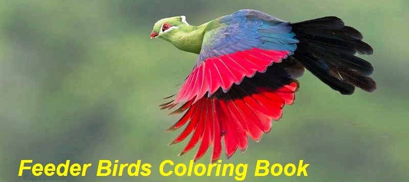 Feeder Bird Coloring Book Charismatic