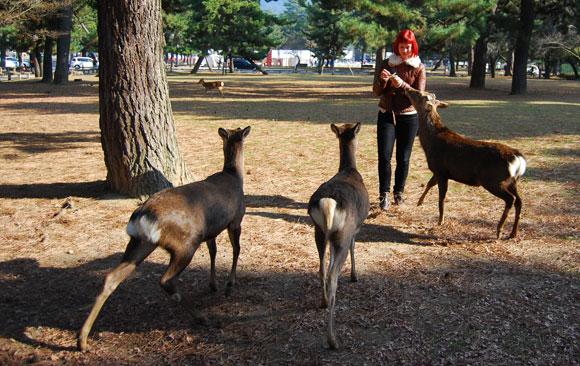deer-nara-japan.jpg