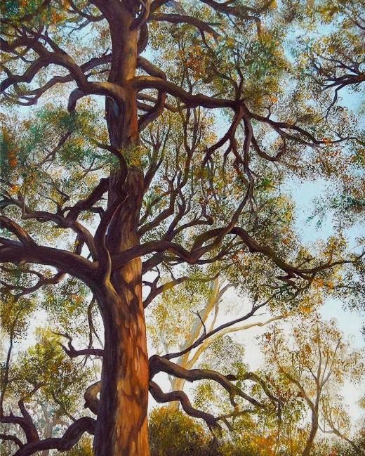 African Tree Top