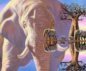 Elephant Reflections