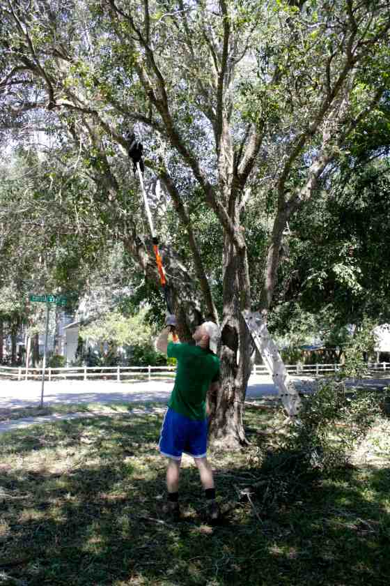 Tree Trimming - Charleston Crafted