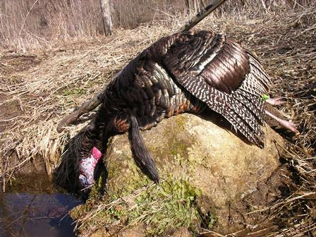 How I Kill Afternoon Gobblers, the lessons of many years