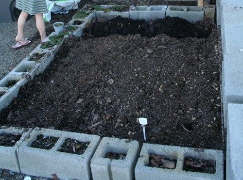 Cinder block Raised vegetable garden