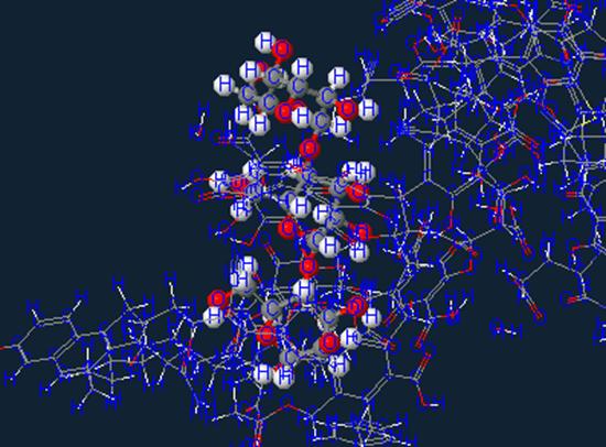 Saccharide sugar molecule