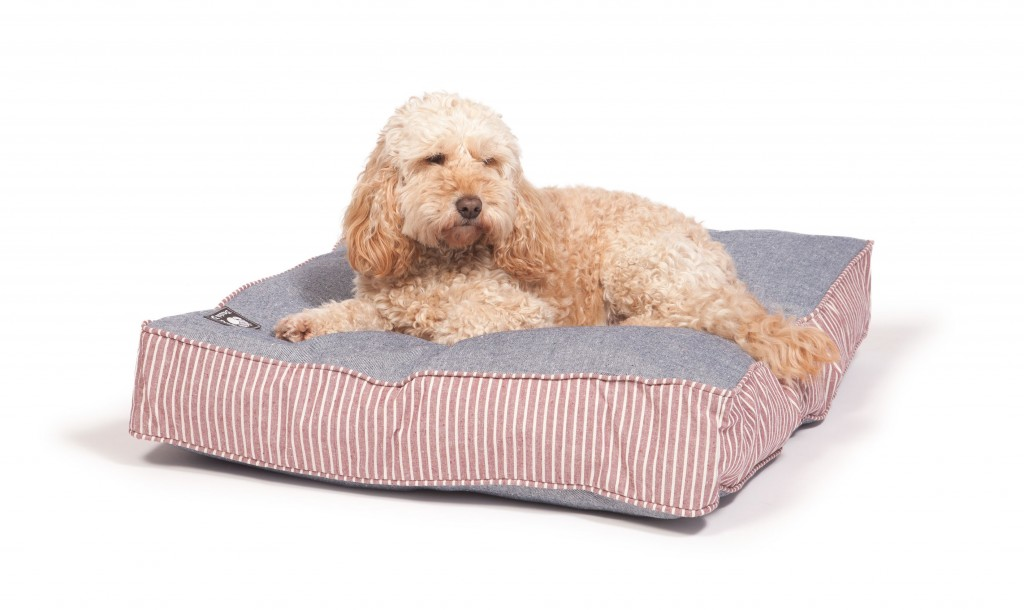 Best Beds For Cockapoos