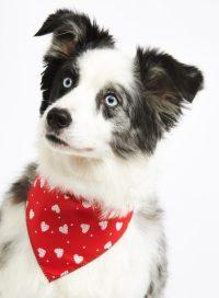 Bandanas For Dogs | Designer Dog Bandanas At Chelsea Dogs