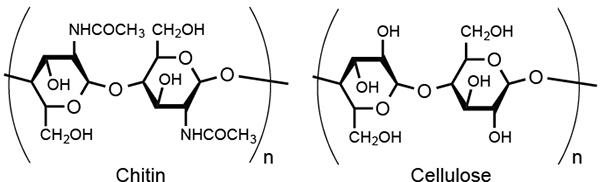 bionanofiber.jpg