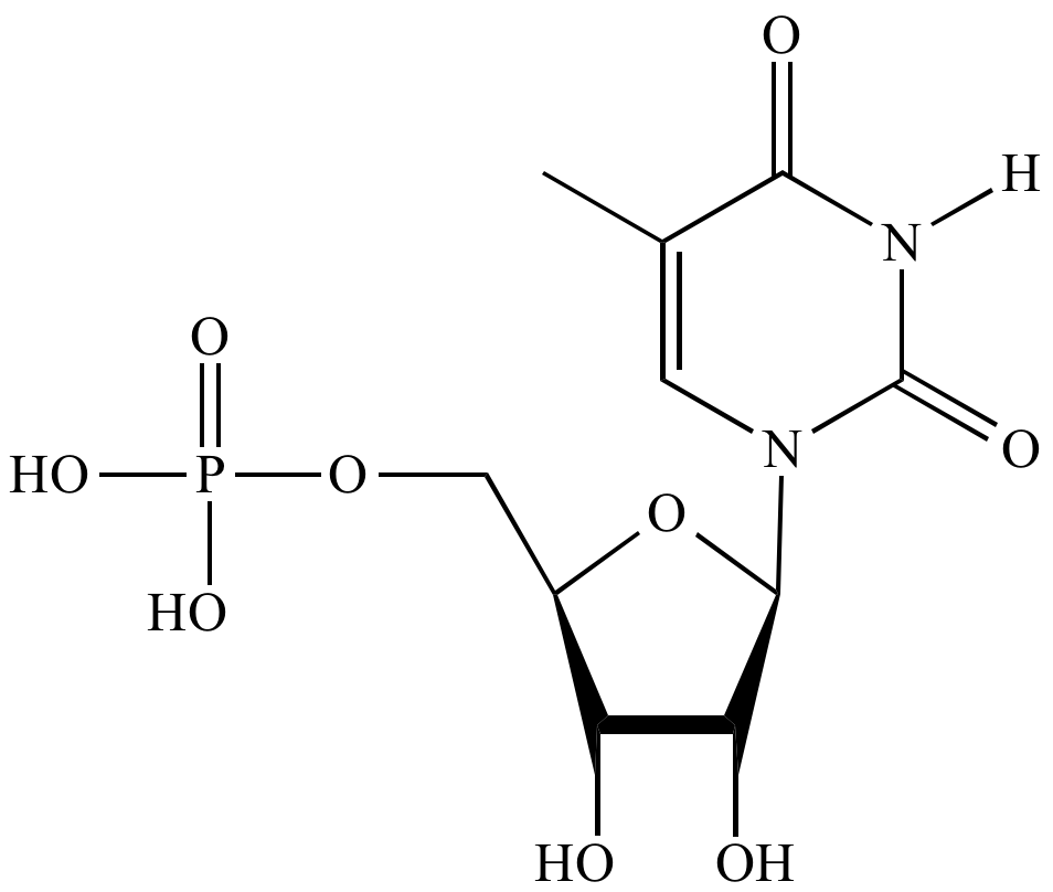 Entry9 Illustrated Glossary Of Organic Chemistry Thymidine