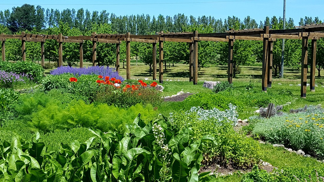 Lavender Labyrinth - Cherry Point Farm \ Market - labyrinth garden design