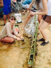 Bamboo stem planting