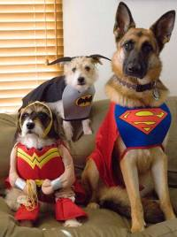 Costumes for Dogs: The Funny Side of Dog Clothing