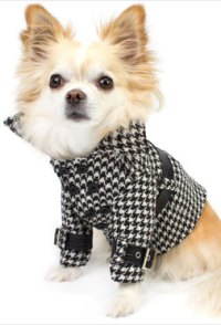 Designer Dog Coats, and A Stroll Through New York City ...